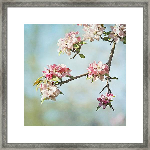 Blossom Branch Framed Print