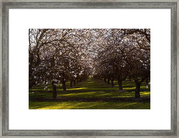 Framed Print featuring the photograph Blossom Tunnel  by Priya Ghose