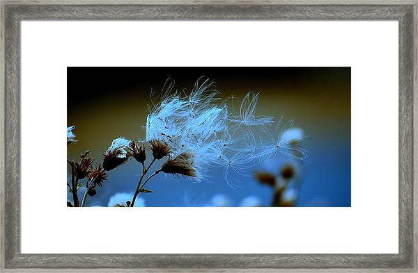 Blowing Away Framed Print