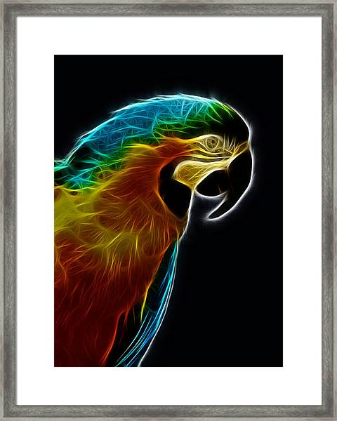 Blue And Gold Macaw Frac Framed Print