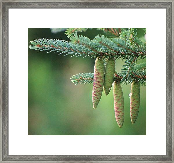 Blue And Green Framed Print by Sarah Boyd