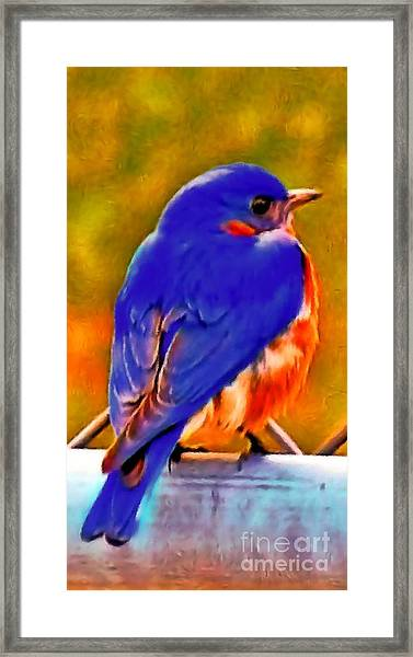 Blue Beauty 2013 Framed Print