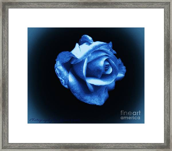 Blue Blue Rose Framed Print