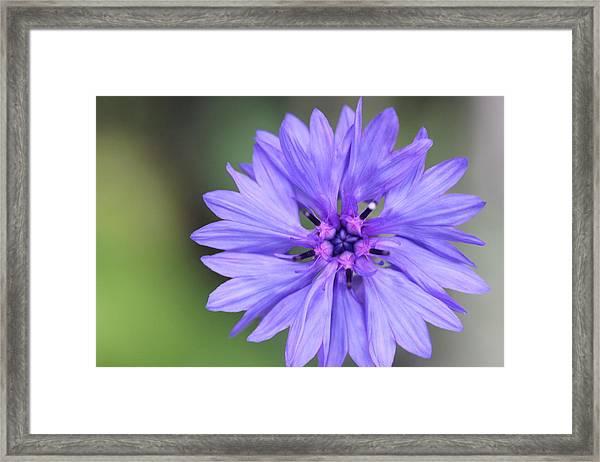 Blue Button Framed Print