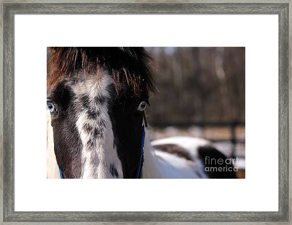 Blue Eye Stare Framed Print