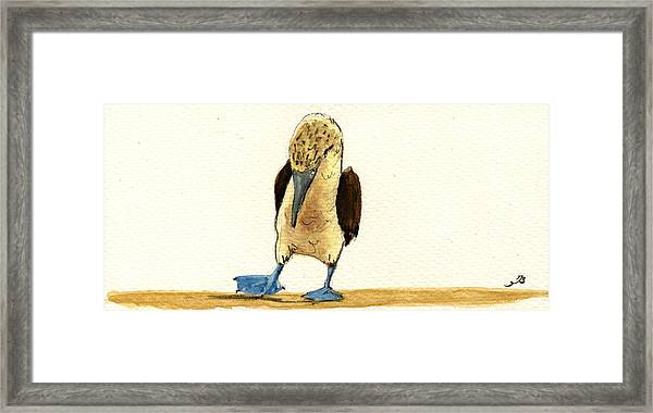 Blue Footed Booby Framed Print