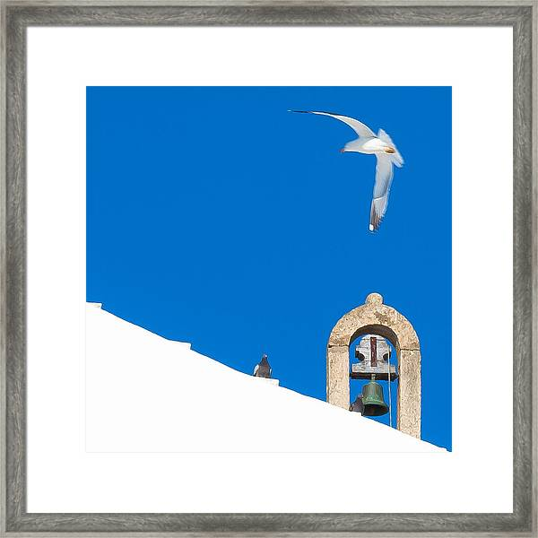 Blue Gull Framed Print