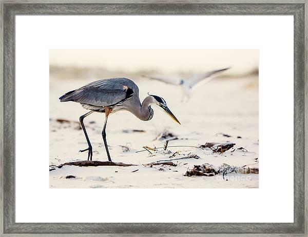 Blue Heron At The Beach Framed Print