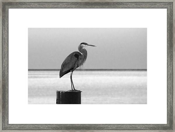 Blue Heron On Post Framed Print