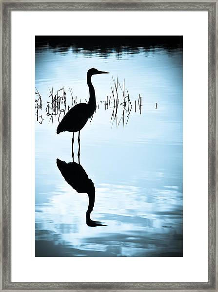 Framed Print featuring the photograph Blue Herons by Francis Trudeau