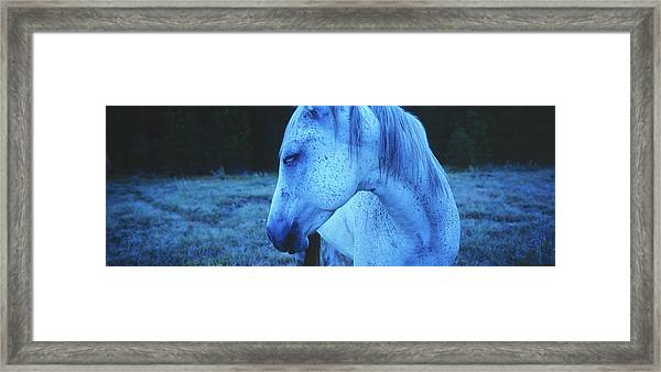 Blue Horse In Field Framed Print