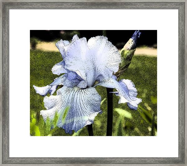 Blue Iris Framed Print
