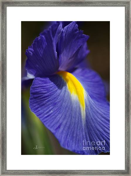 Blue Iris With Yellow Framed Print