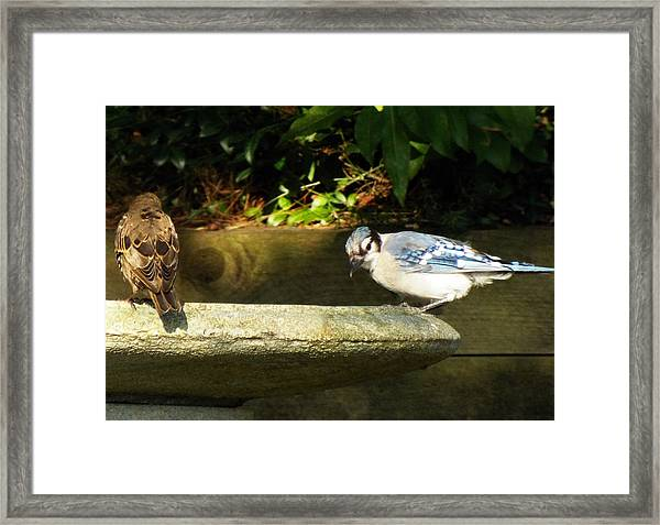 Blue Jay Hello Framed Print by Lisa Roy