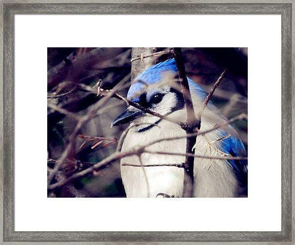 Blue Joy Framed Print