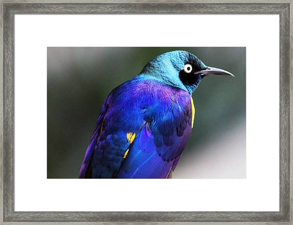 Blue Life Framed Print