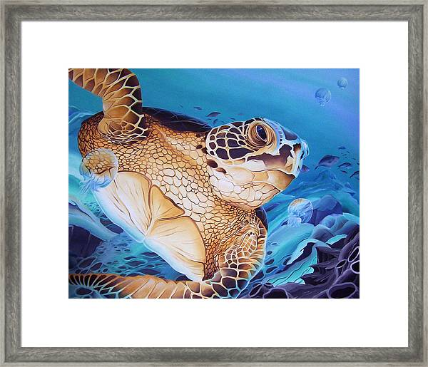Blue Loggerhead Framed Print