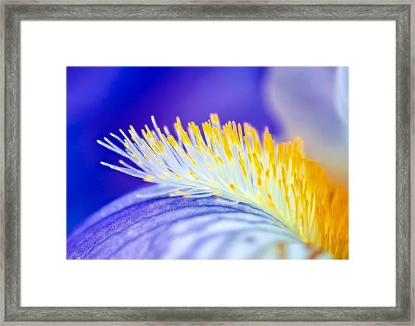 Blue Rapsody Framed Print