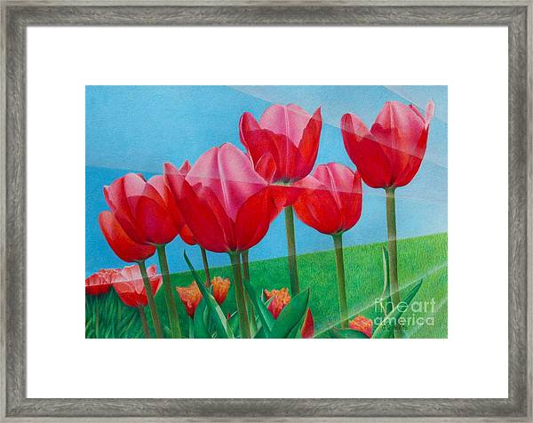 Blue Ray Tulips Framed Print