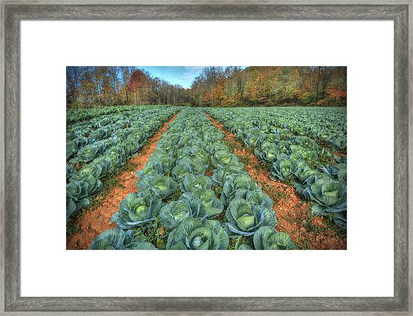 Blue Ridge Cabbage Patch Framed Print