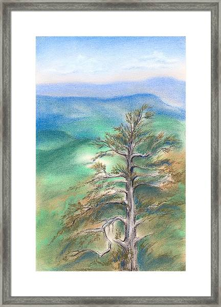 Blue Ridge Pine Framed Print
