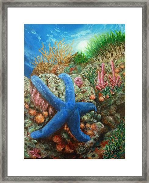 Blue Seastar Framed Print