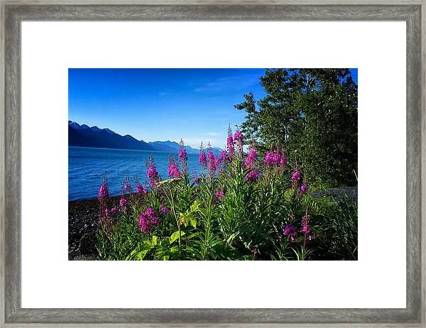 Blue Skies Seward Alaska Framed Print
