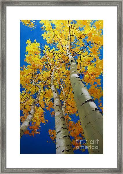 Blue Sky And Tall Aspen Trees Framed Print