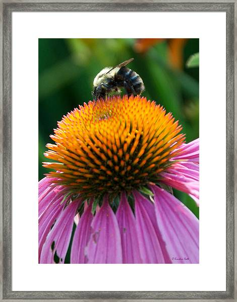 Blue Striped Bee Framed Print