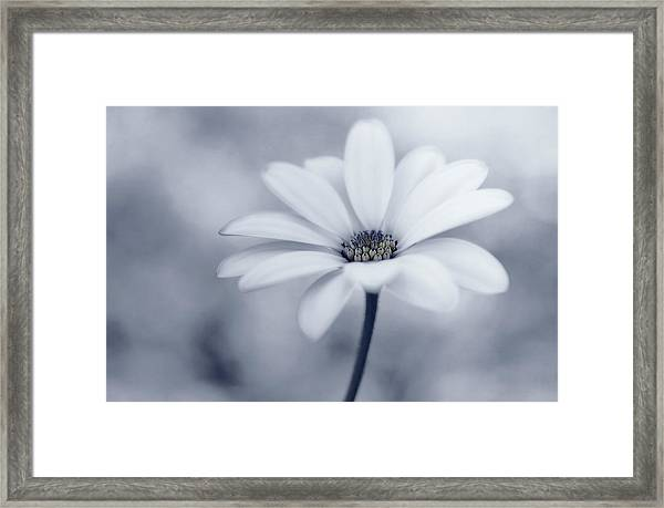 Blue Tones Framed Print