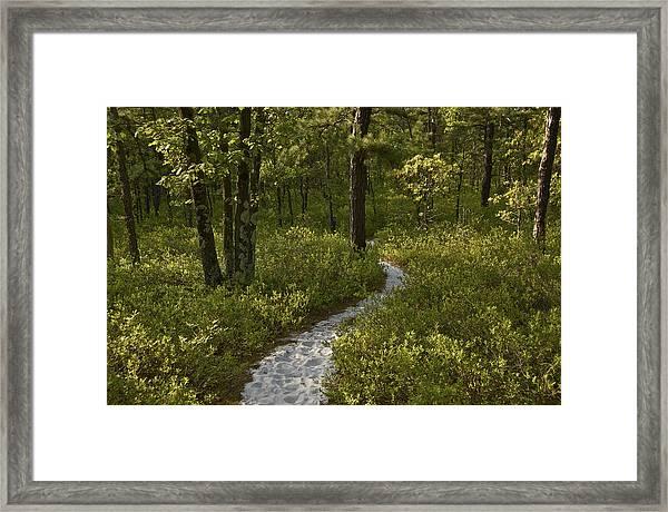 Blue Trail Batsto Framed Print