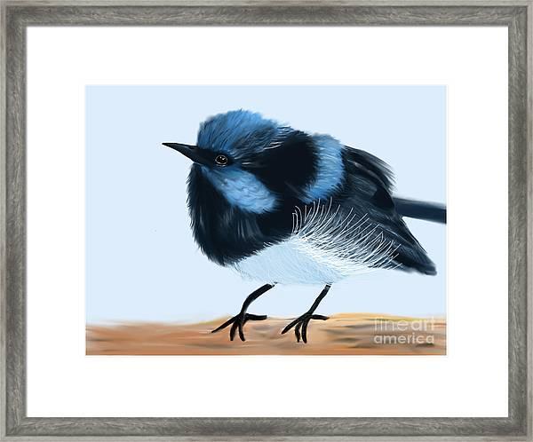 Blue Wren Beauty Framed Print