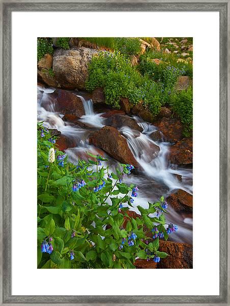 Bluebell Creek Framed Print