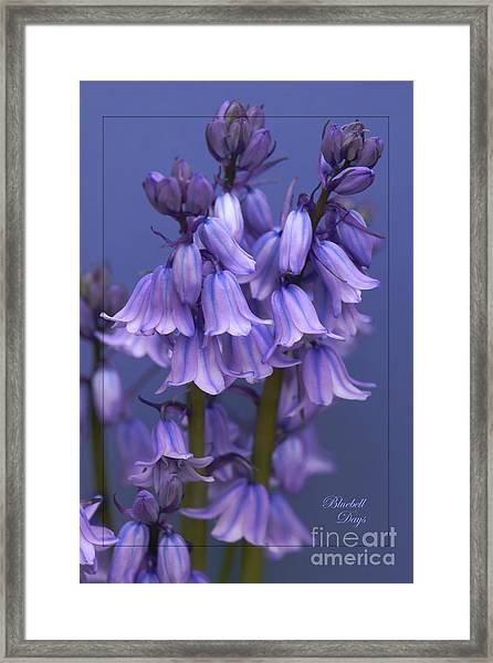 Bluebell Days Framed Print