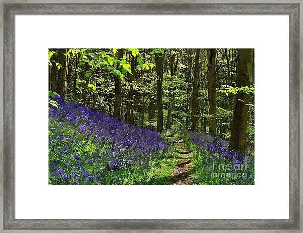 Bluebell Woods Photo Art Framed Print