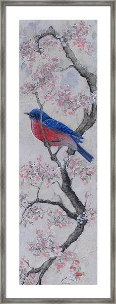 Bluebird In Cherry Blossoms Framed Print by Sandy Clift