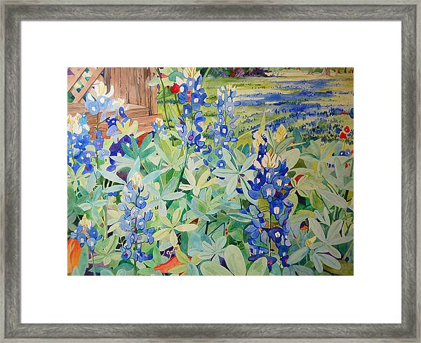 Bluebonnet Beauties Framed Print