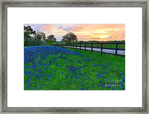 Bluebonnet Fields Forever Brenham Texas Framed Print