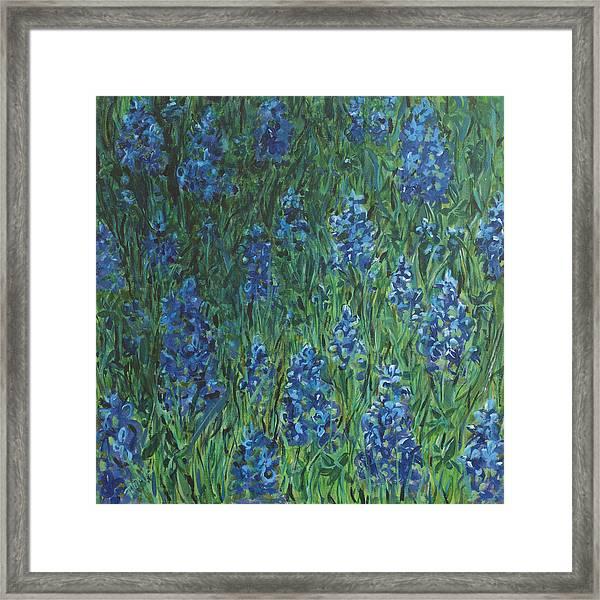 Bluebonnet Square Framed Print by Molly Benson