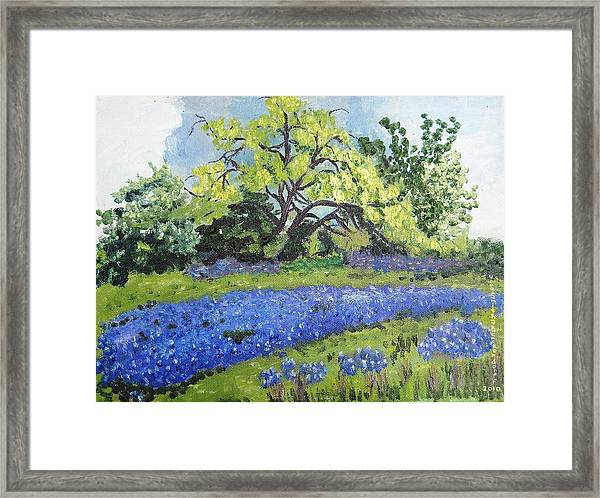 Bluebonnets On A Stormy Day Framed Print