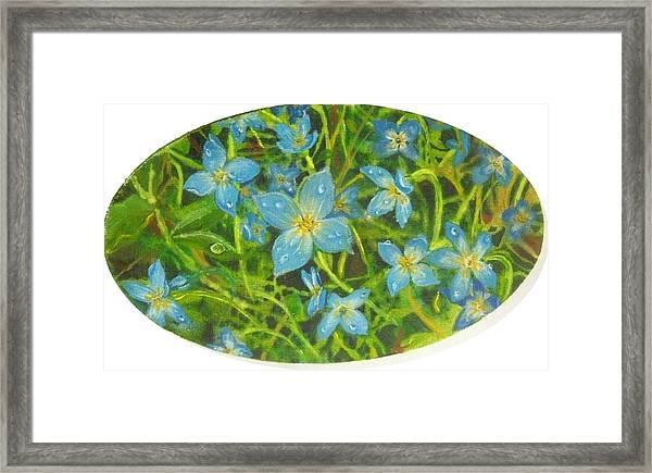 Bluets Of The Shenandoah  Framed Print
