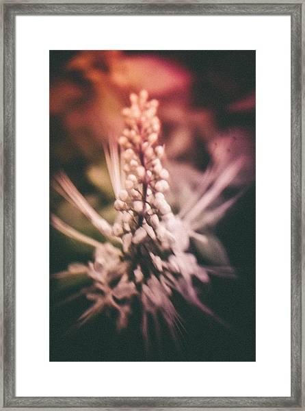 Blured Bloom Framed Print