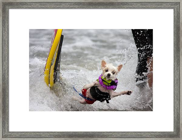 Bobby Gorgeous Wipes Out Framed Print