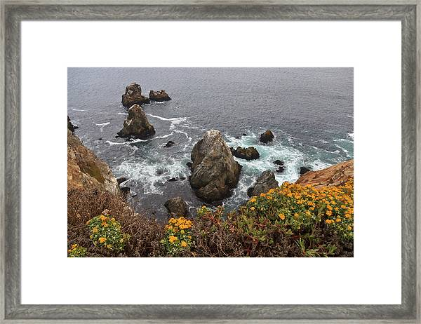 Bodega Wildflowers Framed Print