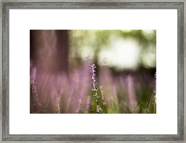 Bokeh With Purple Wildflower Framed Print