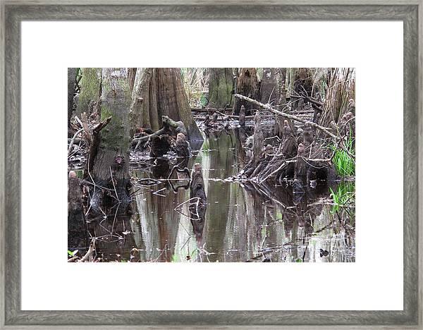 Bold Cypress Reflection Framed Print