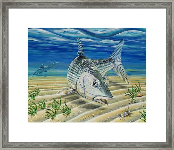 Bonefish On The Flats Framed Print