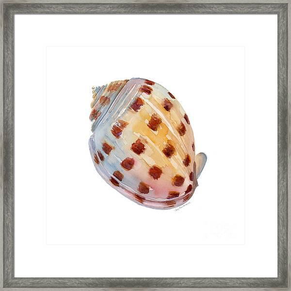 Bonnet Shell Framed Print