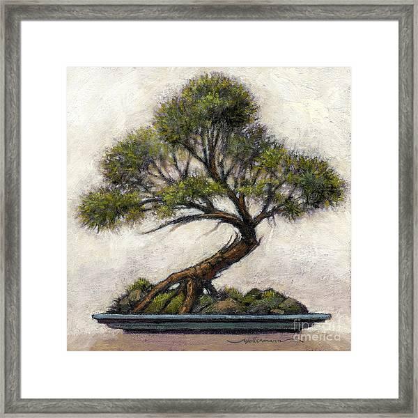 Bonsai Cedar Framed Print