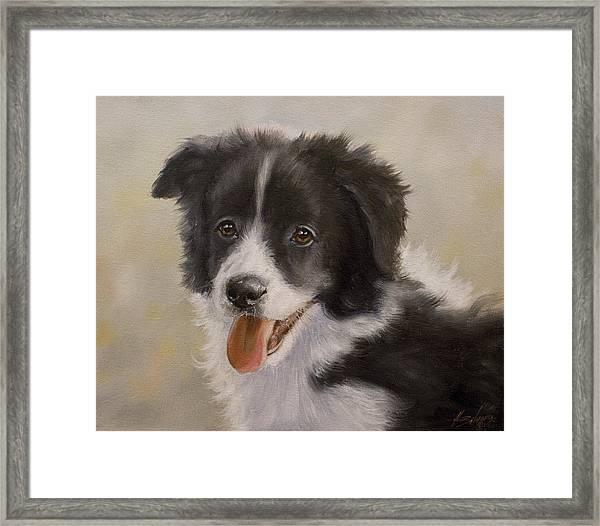 Border Collie Pup Portrait Iv Framed Print